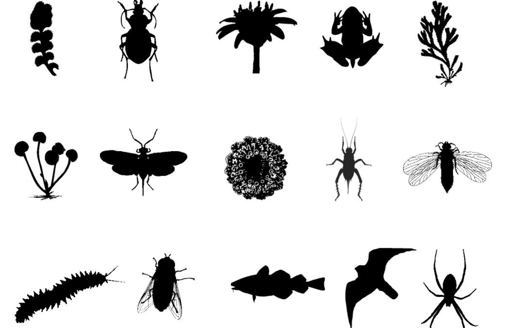 Biodiversity Informatics Working Group